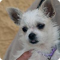 Adopt A Pet :: Georgie Girl - Palmdale, CA
