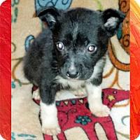 Adopt A Pet :: Ernie - Genoa City, WI