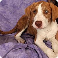 Adopt A Pet :: Newton - St. Louis, MO