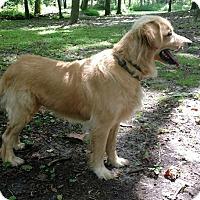 Adopt A Pet :: Sadie M - Capon Bridge, WV