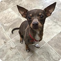 Adopt A Pet :: Andrina - Chico, CA