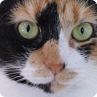 Adopt A Pet :: Henrietta - Murfreesboro, NC