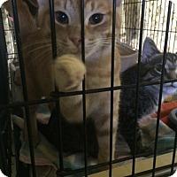 Adopt A Pet :: Becker - Byron Center, MI