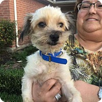 Adopt A Pet :: Hazel - Sudbury, MA