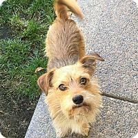 Adopt A Pet :: Danny - Concord, CA