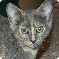 Adopt A Pet :: Braveheart - Brighton, MO