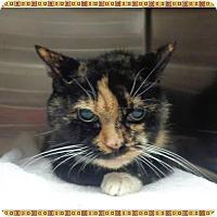 Adopt A Pet :: ZITA - Marietta, GA