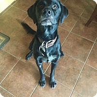 Adopt A Pet :: Maximus - Edmonton, AB