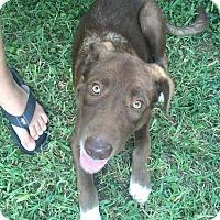 Adopt A Pet :: Lucky - Austin, TX