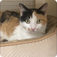 Adopt A Pet :: Cami - Plainville, CT