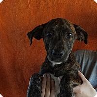 Adopt A Pet :: Mitsu - Oviedo, FL