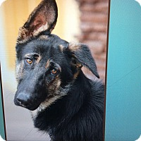 Adopt A Pet :: VELBA VON VERONICA - Los Angeles, CA