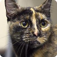 Adopt A Pet :: Hannah - St. Paul, MN