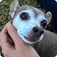 Adopt A Pet :: Elly - Austin, TX