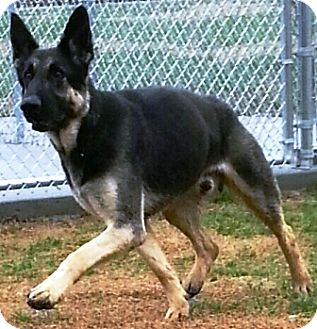 Mason Il Dogs For Adoption