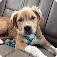 Adopt A Pet :: Spock - Lancaster, OH