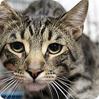 Adopt A Pet :: Teenie - Santa Monica, CA