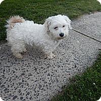 Adopt A Pet :: BeBe - West Deptford, NJ