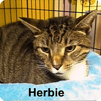 Adopt A Pet :: Herbie - Medway, MA