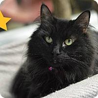 Adopt A Pet :: Tinkerbell 9430 - Atlanta, GA