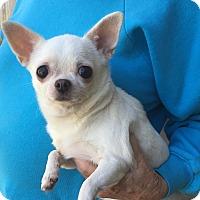 Adopt A Pet :: Kimmie - St. Petersburg, FL