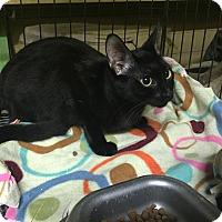 Adopt A Pet :: Zimba - Coral Springs, FL