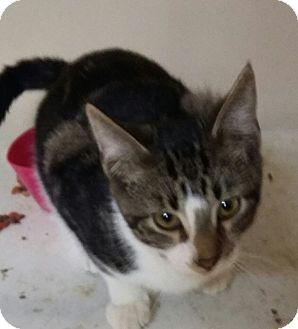Cat Rescue Miami County Ohio
