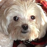 Adopt A Pet :: Edie - Grand Rapids, MI