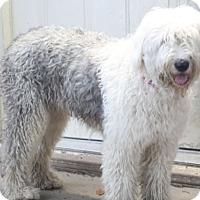 Adopt A Pet :: Kate - Woonsocket, RI