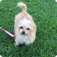 Adopt A Pet :: Cleo - Las Vegas, NV