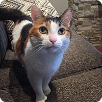 Adopt A Pet :: Pollie - Toronto, ON