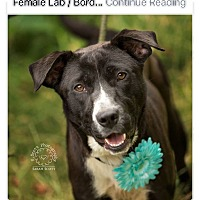 Adopt A Pet :: Melody - Urgent! - Zanesville, OH