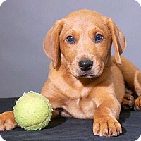 Adopt A Pet :: Mookie - Sudbury, MA