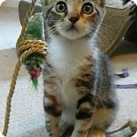 Adopt A Pet :: Kikat - Hampton, VA