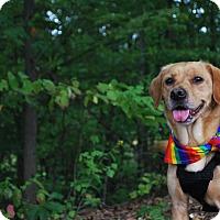 Adopt A Pet :: Tulip - New Castle, PA