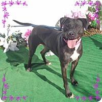 Labrador Retriever Mix Dog for adoption in Marietta, Georgia - STELLA