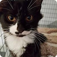 Adopt A Pet :: Jesse - Umatilla, FL