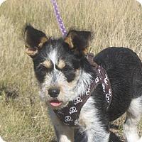 Adopt A Pet :: Buster - Ridgway, CO