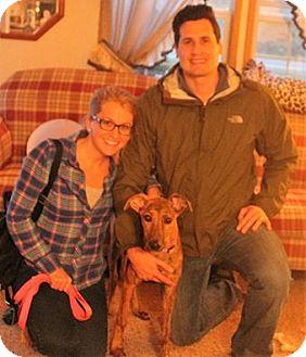 Greyhound Dog for adoption in Northville, Michigan - zBB16 Myles - ADOPTED