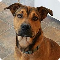 Adopt A Pet :: Sonny - Lisbon, OH