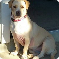Adopt A Pet :: PEACHY - Gustine, CA