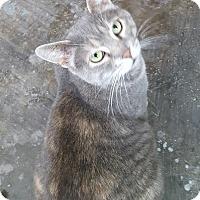 Adopt A Pet :: Chloie - Henderson, KY