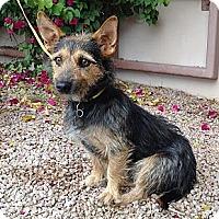 Adopt A Pet :: Goober - Phoenix, AZ
