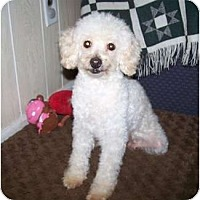 Adopt A Pet :: Rita - Antioch, IL