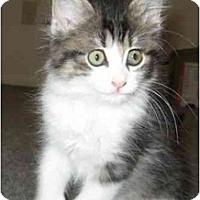 Adopt A Pet :: Billie - Davis, CA