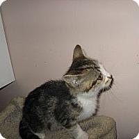 Adopt A Pet :: Chat - Toronto, ON