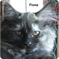 Adopt A Pet :: Fiona - Portland, OR