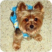 Adopt A Pet :: KoKo - Jacksonville, FL