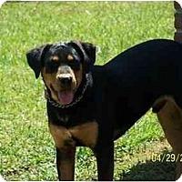 Adopt A Pet :: Rocky - York, SC