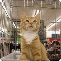 Adopt A Pet :: Lucas - Riverside, RI
